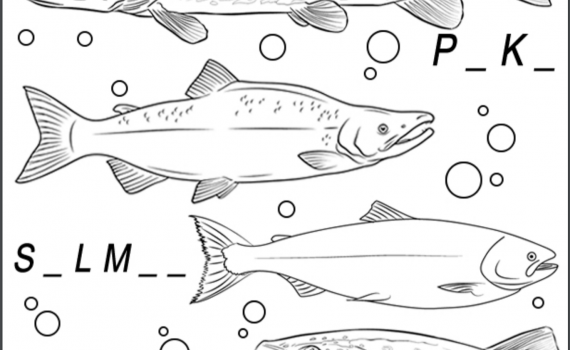 Colorado Fish ID Coloring Sheet With Pike, Salmon, Trout and Perch