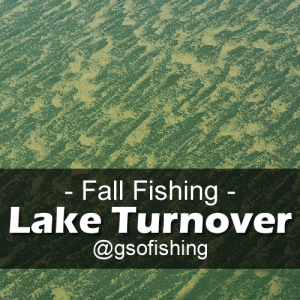 Lake Turnover - Algae, plankton and other debris covers the surface of Blue Mesa turning the clear water green.